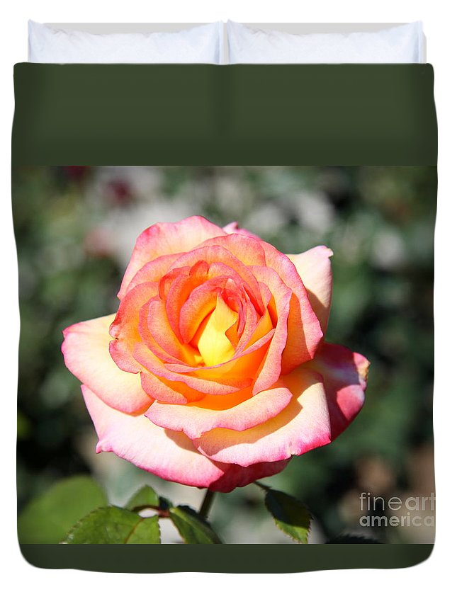 Rose Duvet Cover featuring the photograph Heirloom Rose by Christiane Schulze Art And Photography