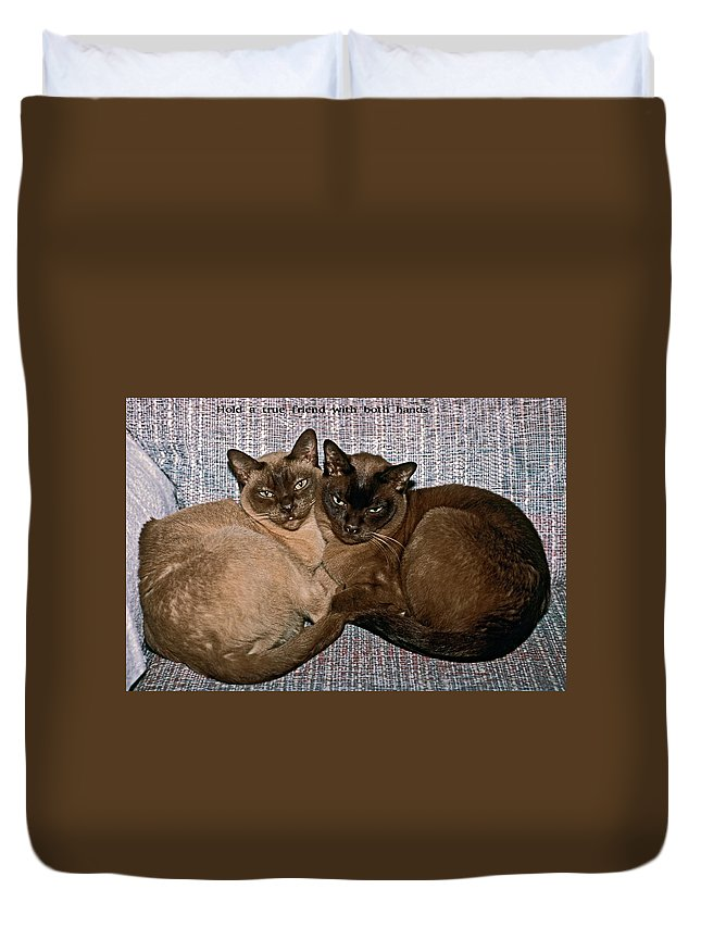 2 Tonkinese Cats Curled Up Together Duvet Cover featuring the photograph Hold A True Friend by Sally Weigand