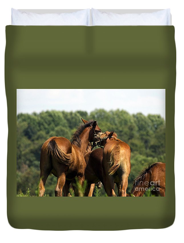 Horse Duvet Cover featuring the photograph Horse Foul Play IIi by Terri Winkler