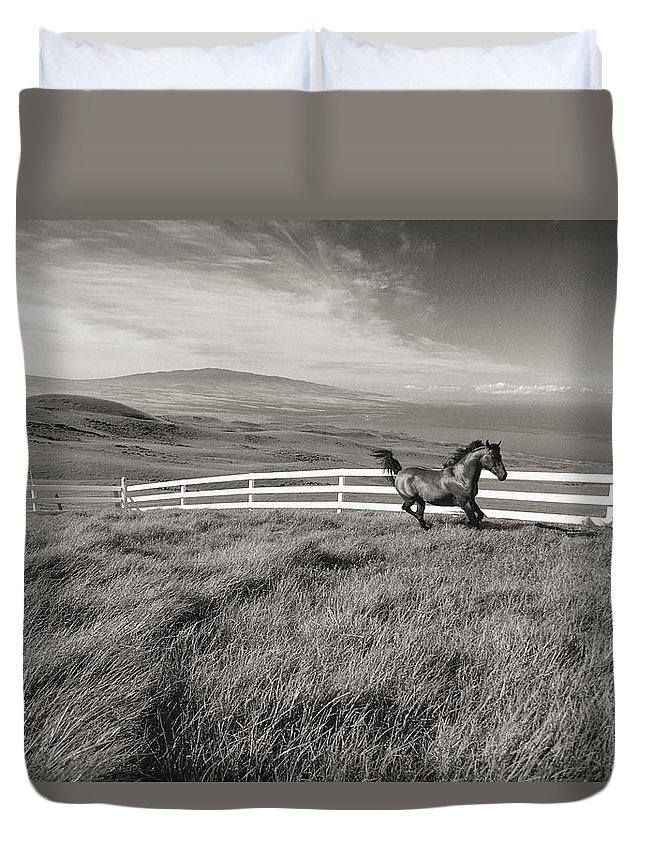 Animal Art Duvet Cover featuring the photograph Horse In Pasture by Dana Edmunds - Printscapes
