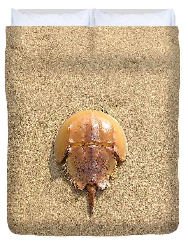 Horseshoe Duvet Cover featuring the photograph Horseshoe Crab In The Sand Campground Beach Cape Cod Eastham Ma by Sven Migot