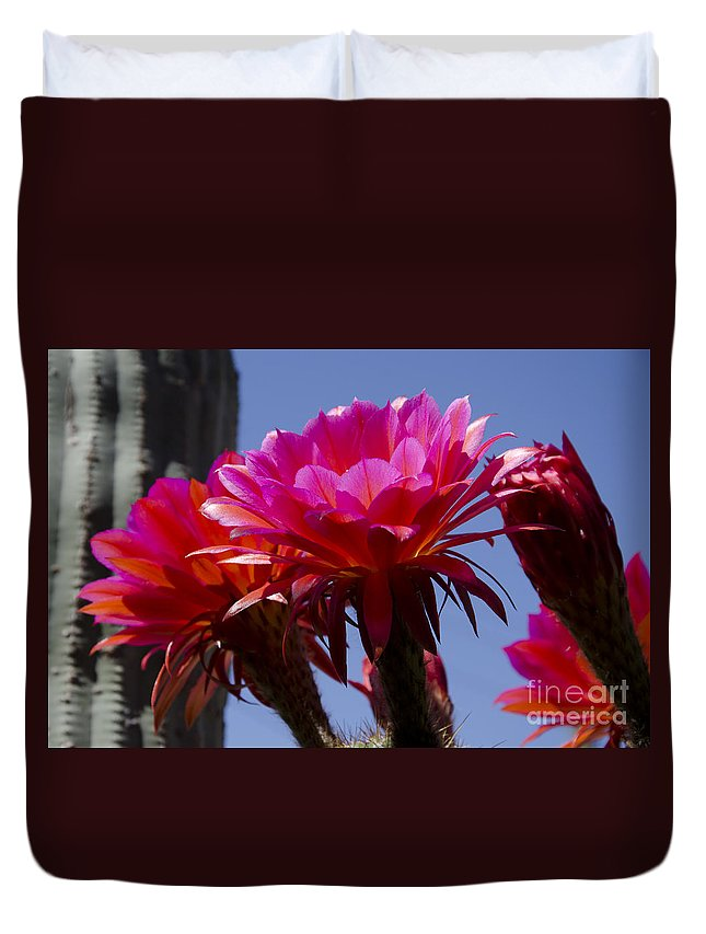 Red Duvet Cover featuring the photograph Hot Pink Cactus Flowers by Jim And Emily Bush
