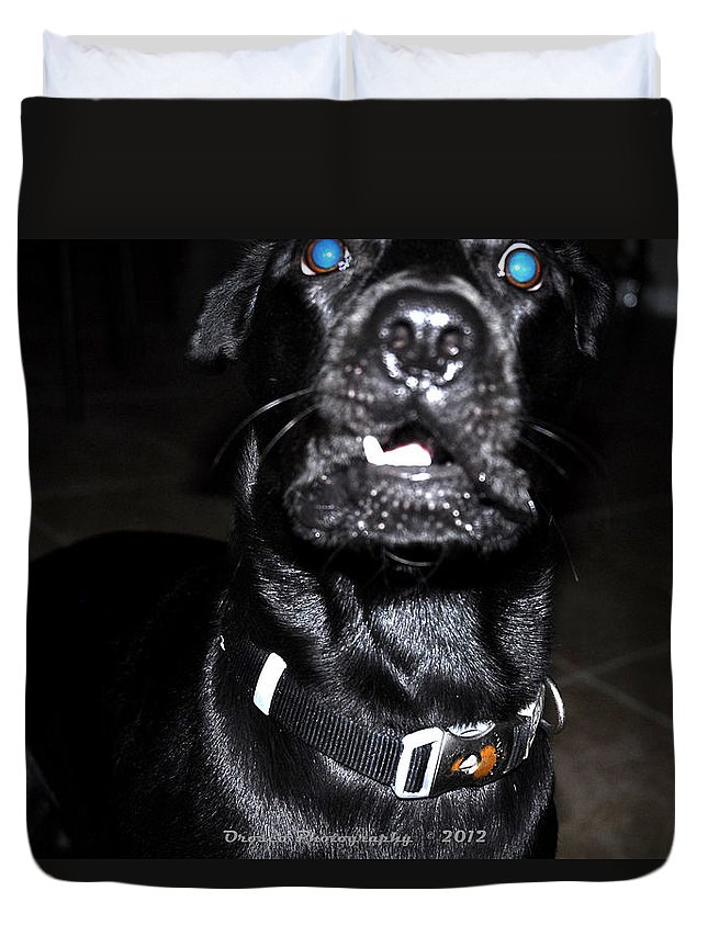 Dog Duvet Cover featuring the photograph Huhhh by G Adam Orosco