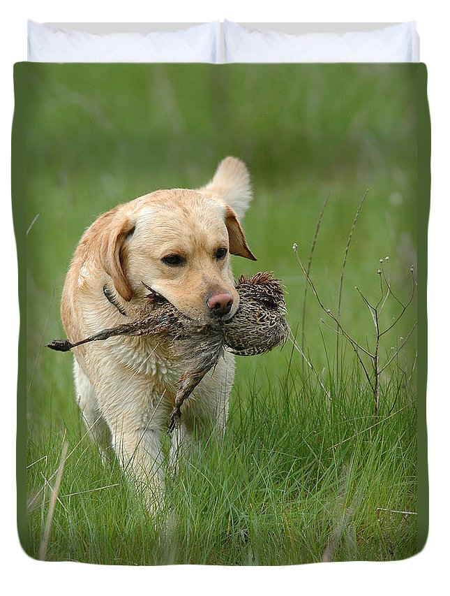 Animal Duvet Cover featuring the photograph Hunting Dog by Waldek Dabrowski