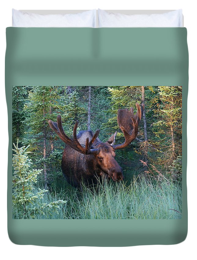 Alaska Duvet Cover featuring the photograph Hunting Some Munchies by Doug Lloyd