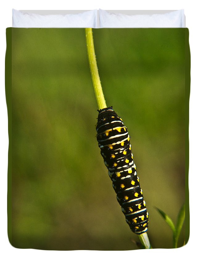 Hymenoptera Duvet Cover featuring the photograph Hymenoptera Larva 2 by Douglas Barnett