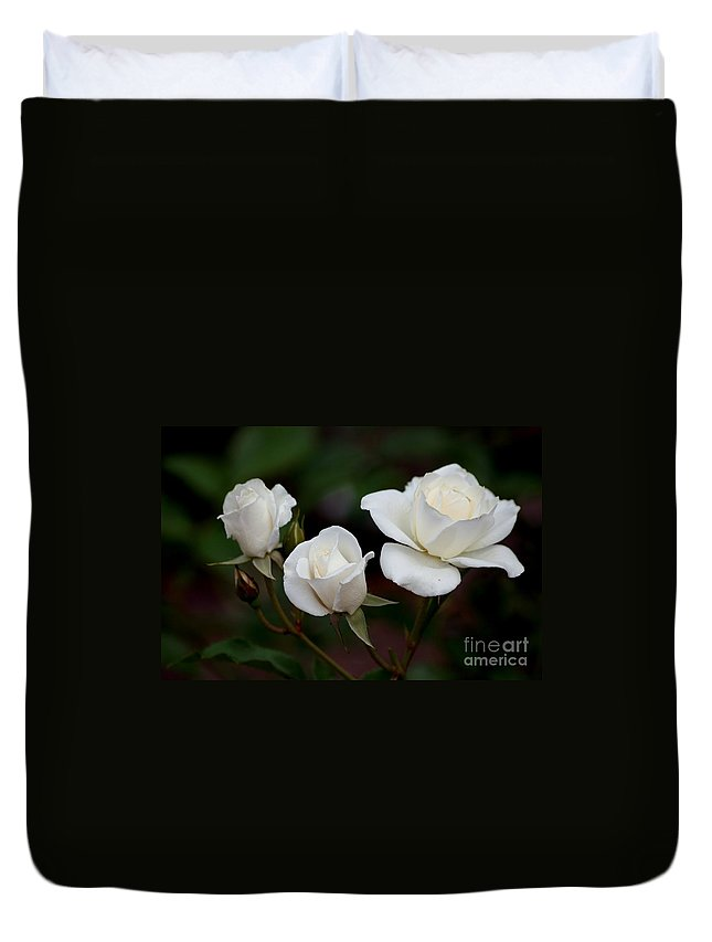 Roses Duvet Cover featuring the photograph Iceberg Roses by Living Color Photography Lorraine Lynch