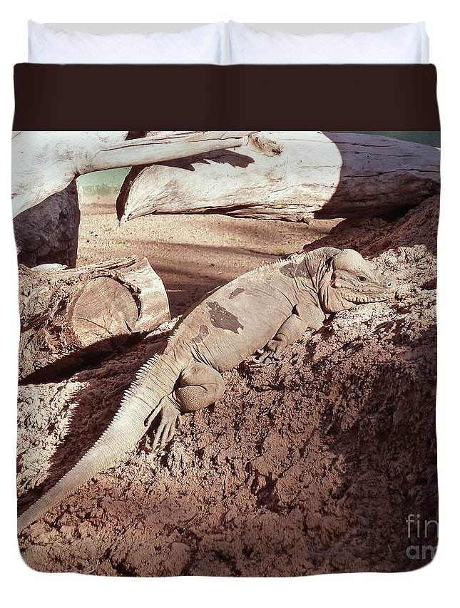 Iguana In The Sun Duvet Cover featuring the photograph Iguana In The Sun by Methune Hively