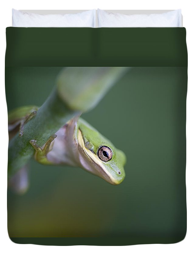 Alabama Duvet Cover featuring the photograph I'm Looking At You by Kathy Clark