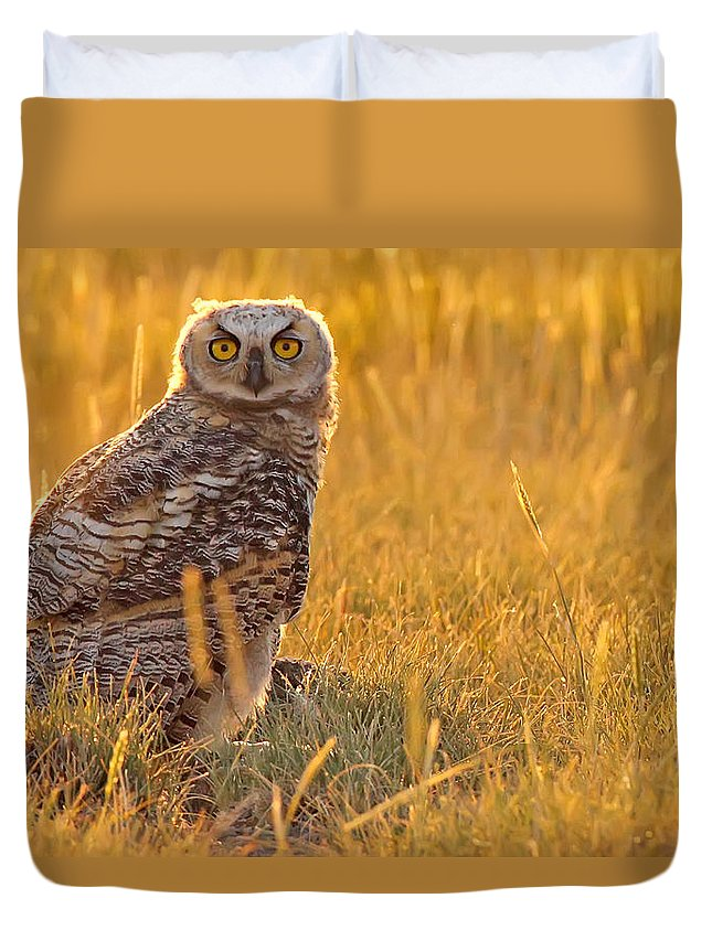 Light Duvet Cover featuring the photograph Immature Great Horned Owl Backlit by Robert Postma