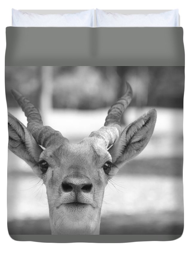 Impala Duvet Cover featuring the photograph Impala -black And White by Douglas Barnard