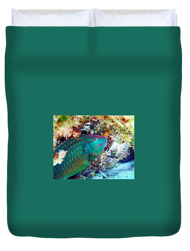 Parrotfish Duvet Cover featuring the photograph In The Lair by Li Newton