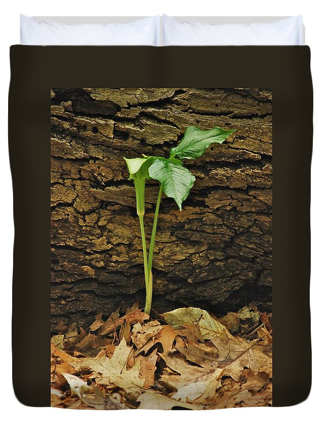 Arisaema Triphyllum Duvet Cover featuring the photograph Indian Turnip 5582 0240 by Michael Peychich