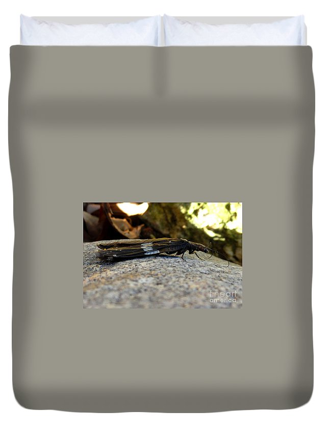 Insect Duvet Cover featuring the photograph Insect Stripes by Meandering Photography