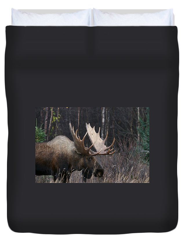 Alaska Duvet Cover featuring the photograph Intent by Doug Lloyd