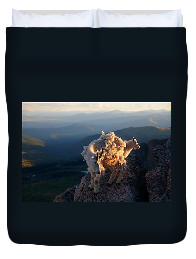 Mountain Goats; Posing; Group Photo; Baby Goat; Nature; Colorado; Crowd; Baby Goat; Mountain Goat Baby; Happy; Joy; Nature; Brothers Duvet Cover featuring the photograph Two Faces West by Jim Garrison