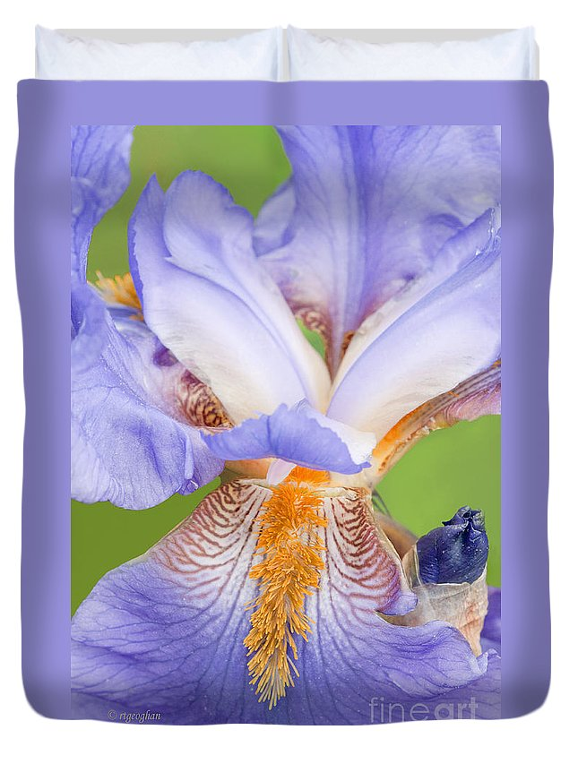 Iris Duvet Cover featuring the photograph Iris Close Up Blue And Gold by Regina Geoghan