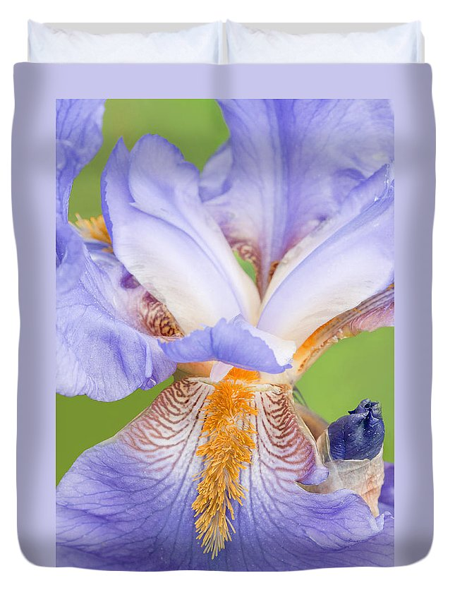 Iris Duvet Cover featuring the photograph Iris Full Bloom by Regina Geoghan