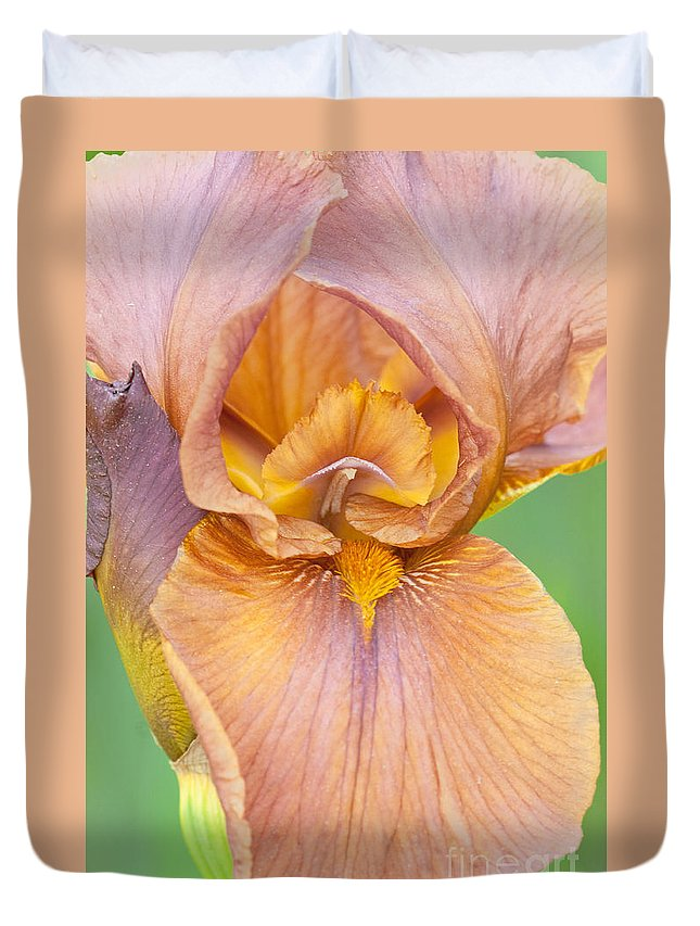 Iris Duvet Cover featuring the photograph Iris In Gold by Regina Geoghan