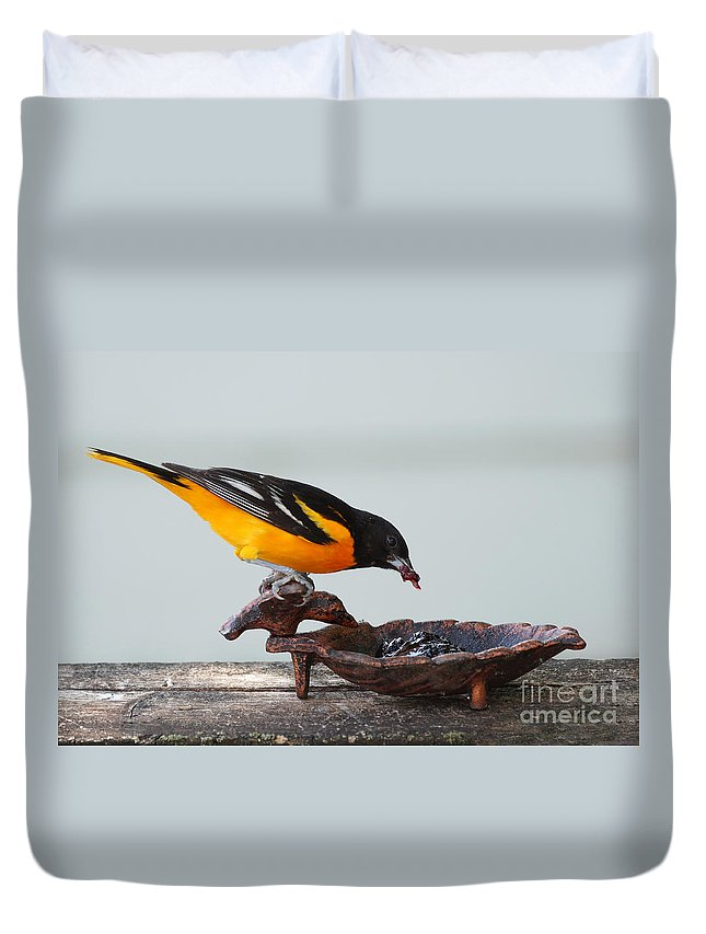 Orioles Duvet Cover featuring the photograph Jelly Time by Lori Tordsen