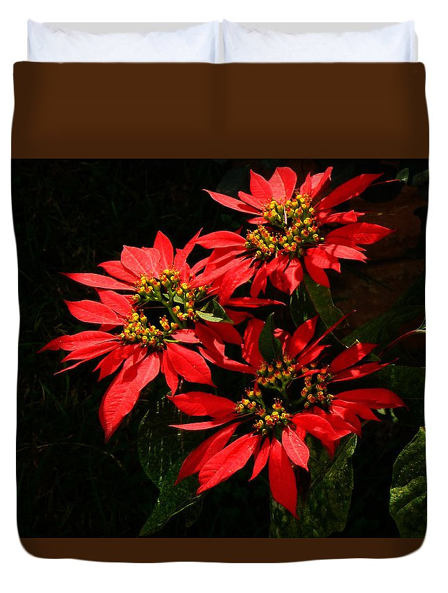 Euphorbia Duvet Cover featuring the photograph Joy And Prosperity IIi by Xueling Zou