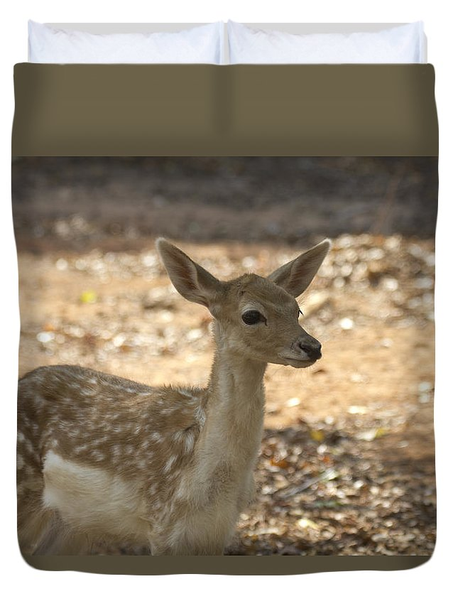 Juvenile Deer Duvet Cover featuring the photograph Juvenile Deer by Douglas Barnard