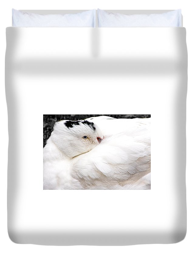 White Bird Duvet Cover featuring the photograph Keeping Warm by Burney Lieberman