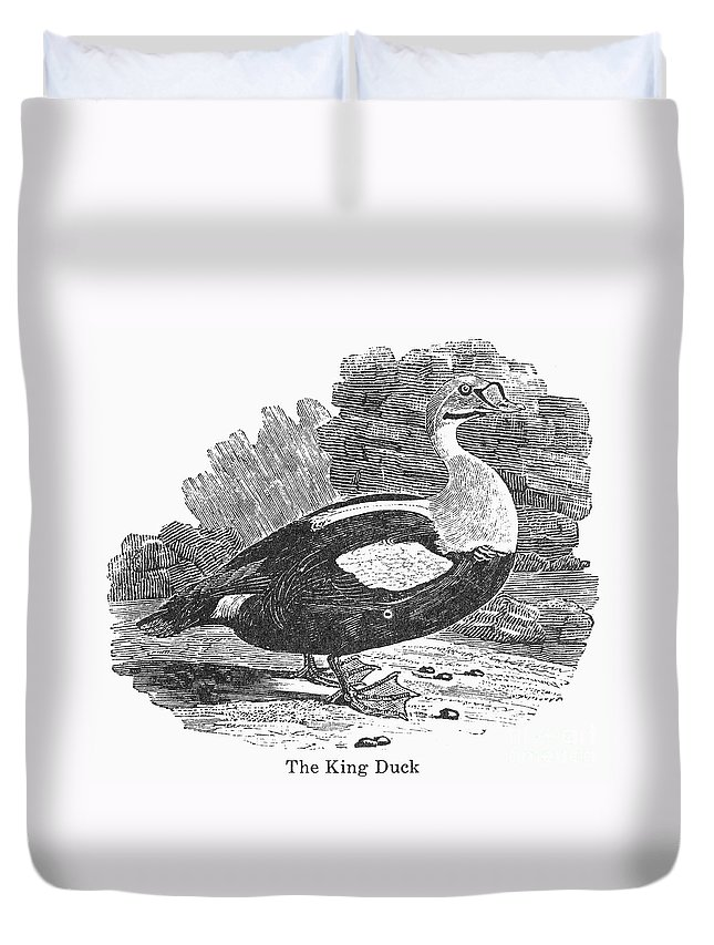 19th Century Duvet Cover featuring the photograph King Duck by Granger