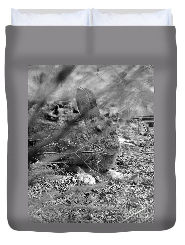Hare Duvet Cover featuring the photograph King Hare by Lloyd Alexander