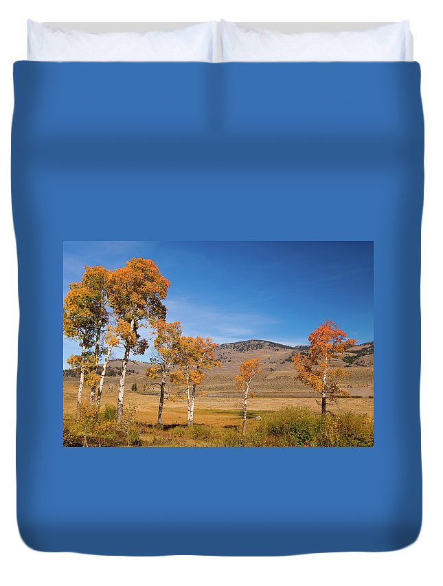 Yellowstone Duvet Cover featuring the photograph Lamar Valley Aspens by Steve Stuller