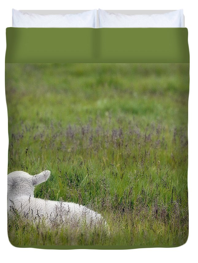 Light Duvet Cover featuring the photograph Lamb In Pasture, Alberta, Canada by Darwin Wiggett