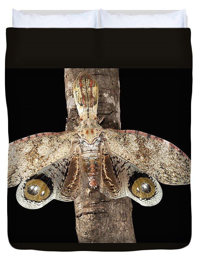 Mp Duvet Cover featuring the photograph Lantern Bug Fulgora Laternaria by Christian Ziegler