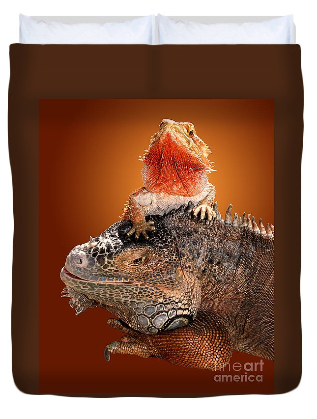 Bearded Dragon Duvet Cover featuring the photograph Lap Lizard by Jim Carrell