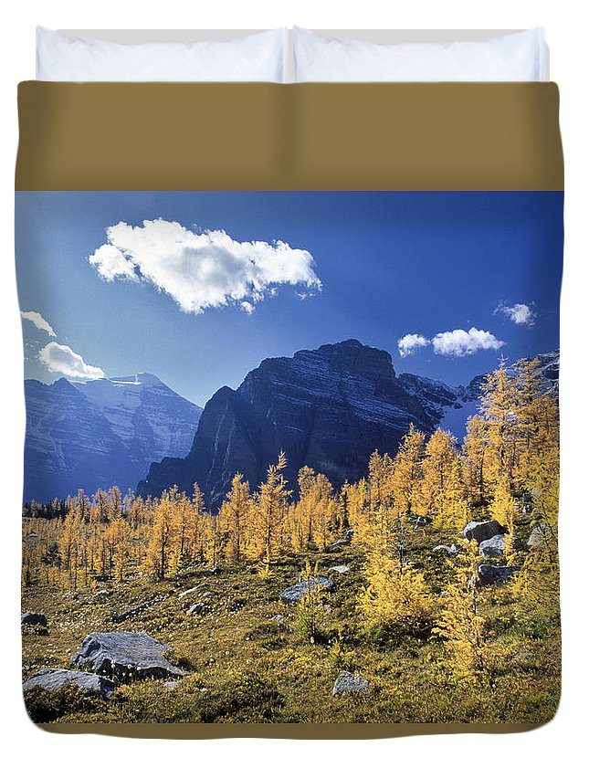 Light Duvet Cover featuring the photograph Larch Trees From The Saddleback Trail by Darwin Wiggett