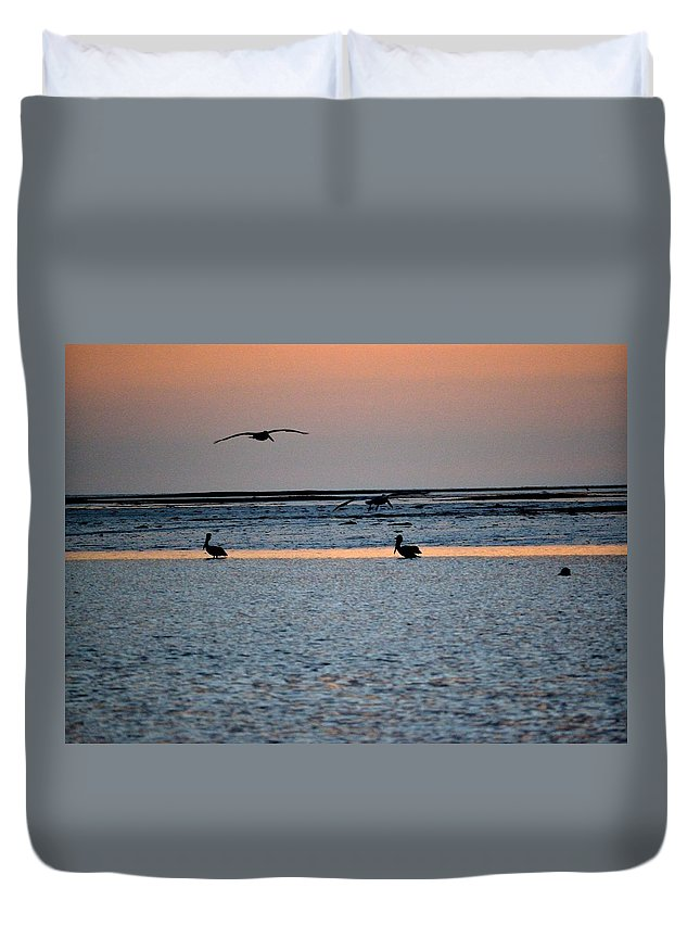 Pelicans Duvet Cover featuring the photograph Late Comers by Kari Tedrick