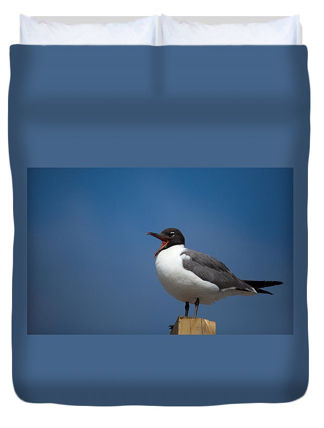 Gull Duvet Cover featuring the photograph Laughing Gull Laughing by Karol Livote