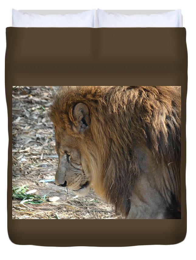 Lion Duvet Cover featuring the photograph Le Lion by Maggy Marsh