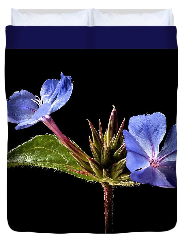 Flower Duvet Cover featuring the photograph Leadwort by Endre Balogh
