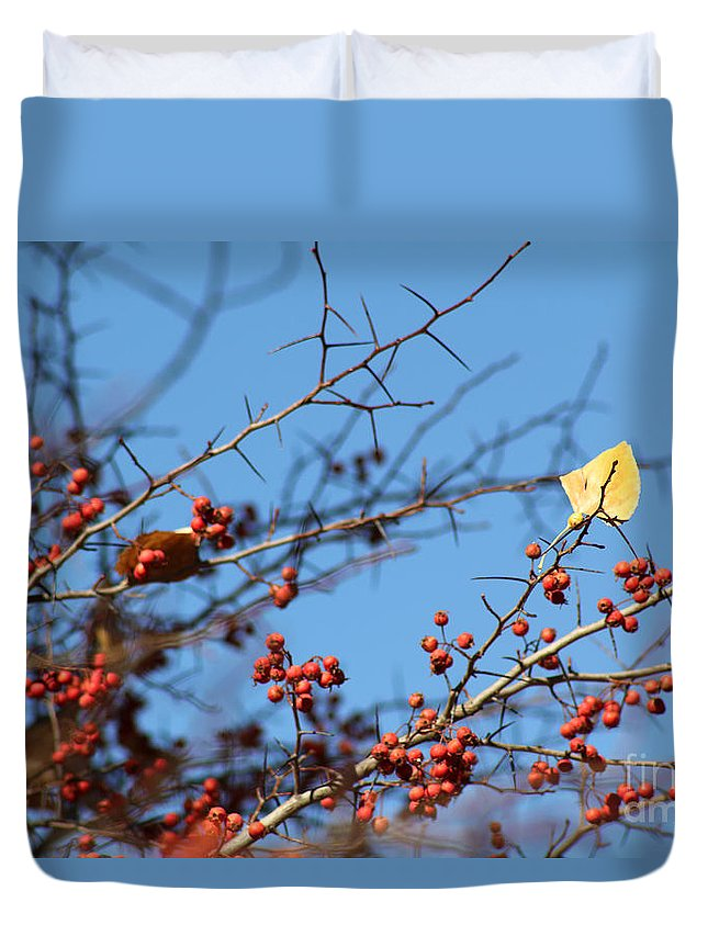 Poster Duvet Cover featuring the photograph Leaf Among Thorns by Alycia Christine