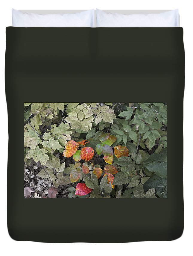Poison Ivy Duvet Cover featuring the photograph Leaves Of Three  Let It Be by Elaine Mikkelstrup