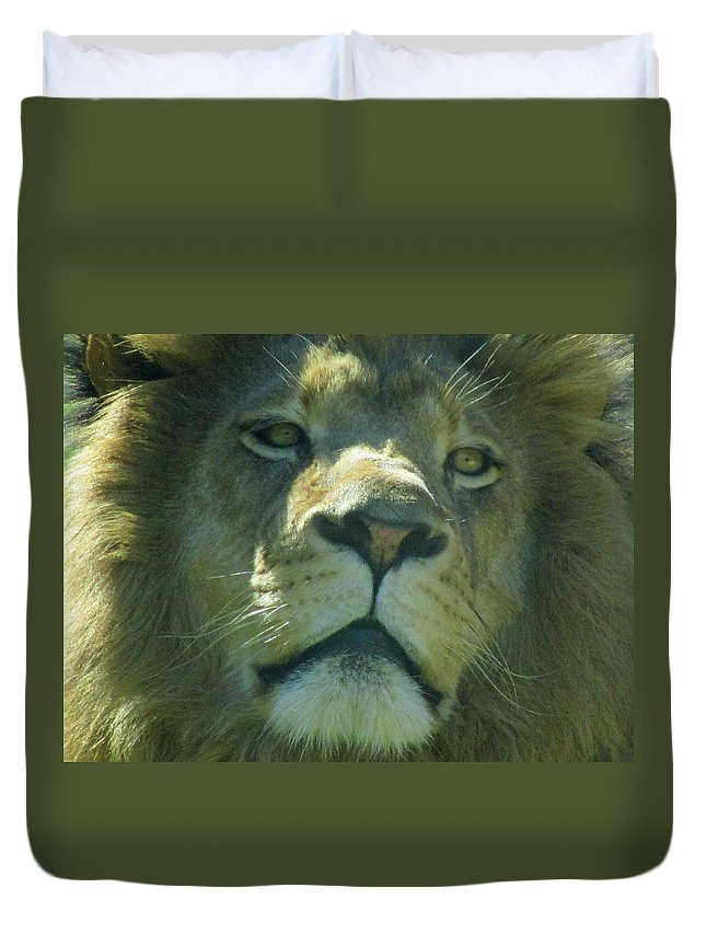 Lion Duvet Cover featuring the photograph Leo,lion by Sandra Reeves