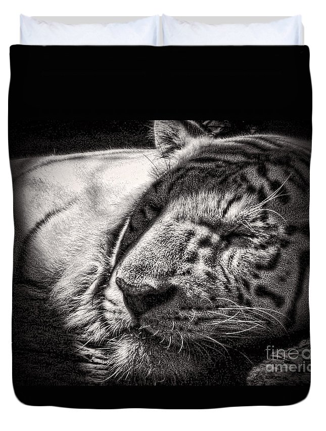 Tiger Duvet Cover featuring the photograph Let Sleeping Tiger Lie by Traci Cottingham