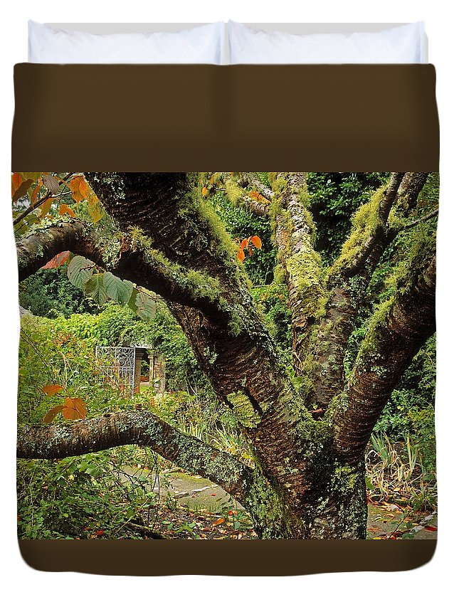 Architectural Detail Duvet Cover featuring the photograph Lichen Covered Apple Tree, Walled by The Irish Image Collection