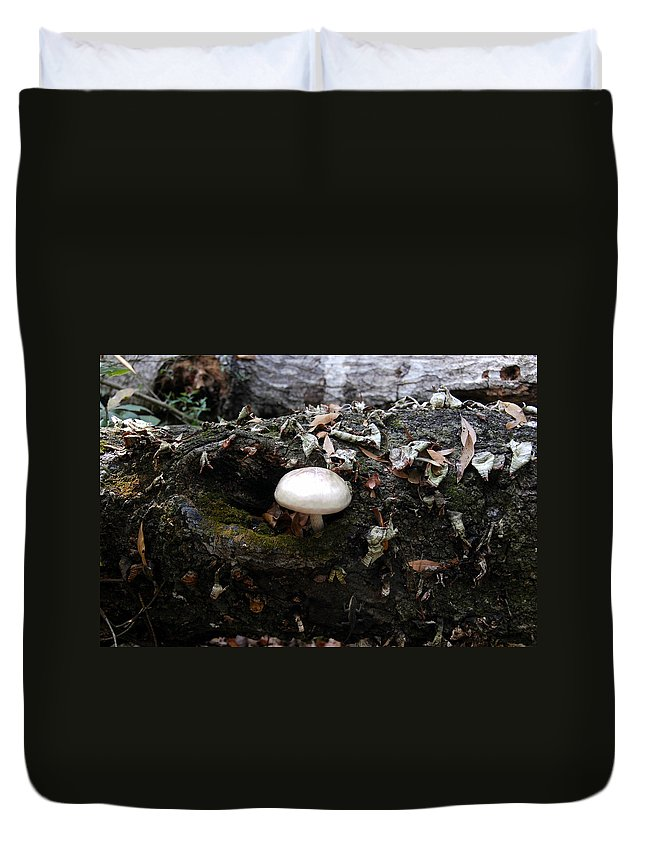 Fine Art Photography Duvet Cover featuring the photograph Life From Death by David Lee Thompson