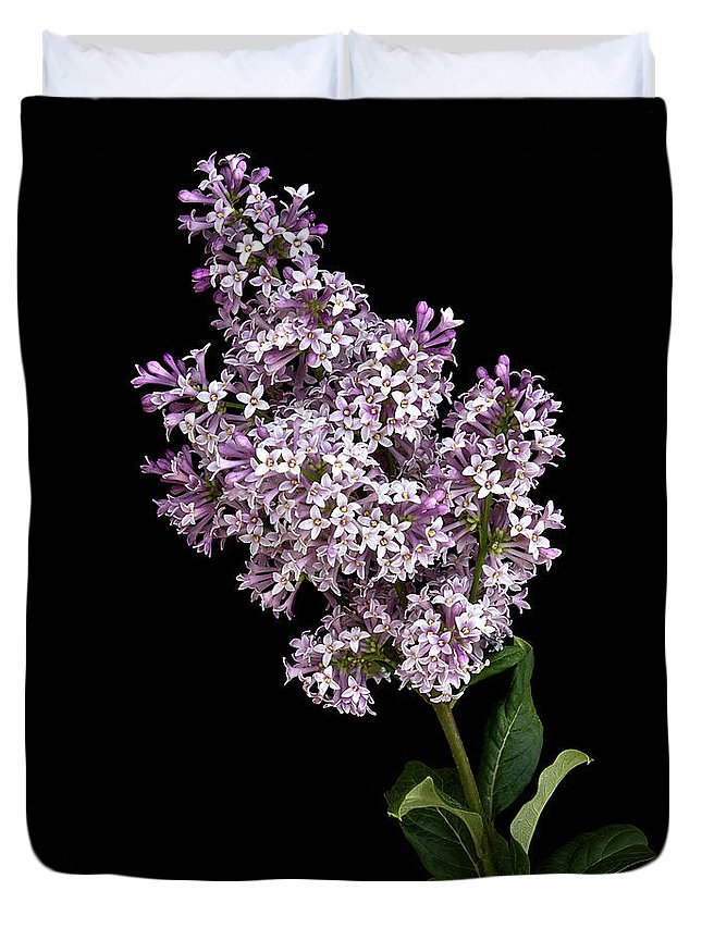 Flower Duvet Cover featuring the photograph Lilac by Endre Balogh