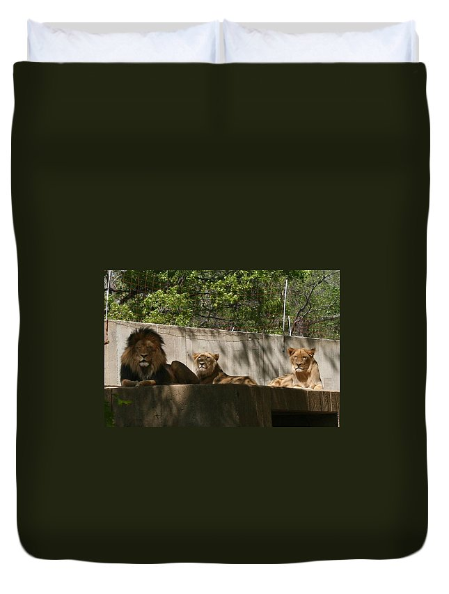Lion Duvet Cover featuring the photograph Lion Around by Stacy C Bottoms