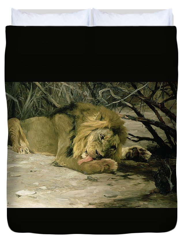 Male; Mane; Resting; Cleaning; Paw; Licking; Undergrowth; Big Cat; C19th; C20th Duvet Cover featuring the painting Lion Reclining In A Landscape by Wilhelm Kuhnert
