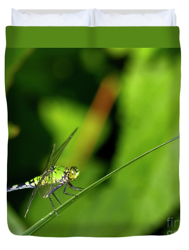 Dragonfly Duvet Cover featuring the photograph little Green wings by Ken Frischkorn