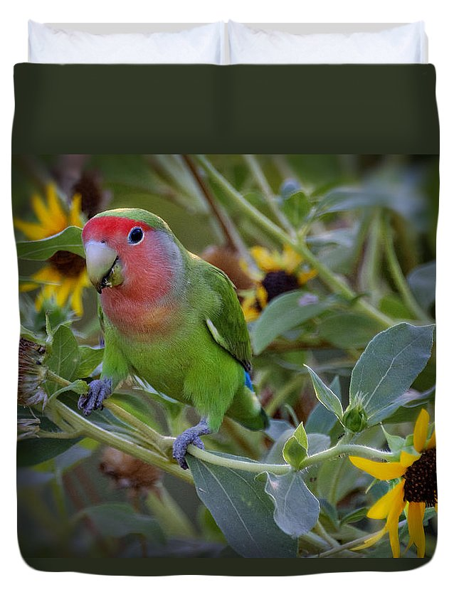 Lovebird Duvet Cover featuring the photograph Little Lovebird by Saija Lehtonen