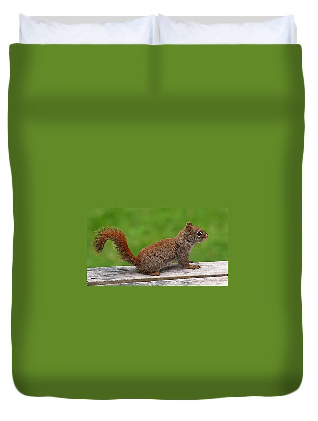 Squirrel Duvet Cover featuring the photograph Little Red by Jeff Galbraith